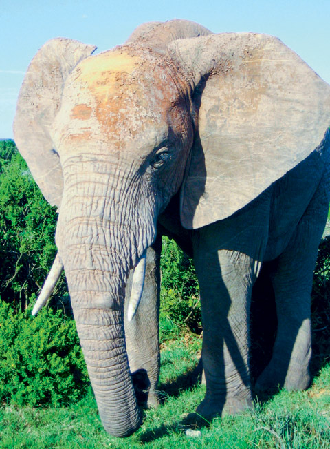 peticija-za-spas-na-afrikanski-slonovi-1.jpg