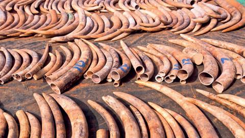 peticija-za-spas-na-afrikanski-slonovi-2.jpg