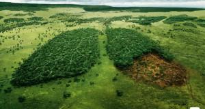 Десетици милијарди долари се потребни за спас на шумите во светот