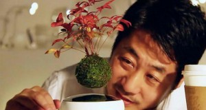 Лебдечки бонсаи: Нов динамички вид на вегетативна декорација