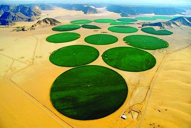 Органски фарми среде пустина
