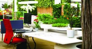 Растенијата – повеќе од декорација во ентериерот