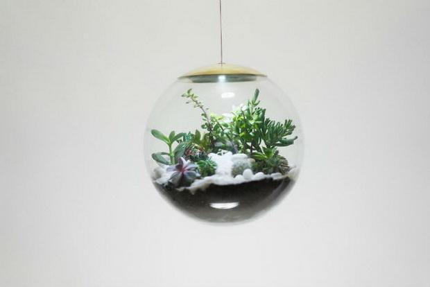 растение_2