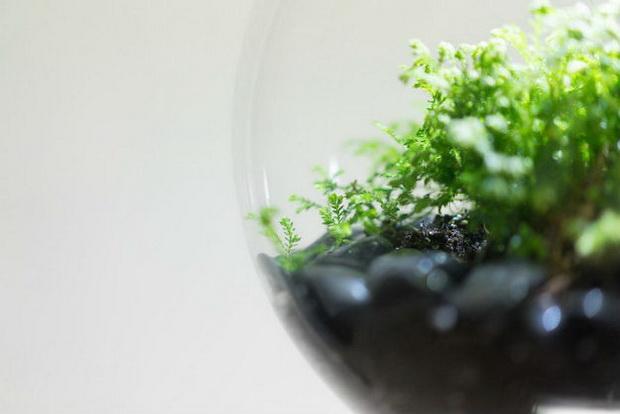 растение_5