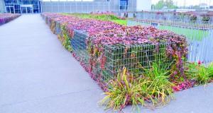 Примена на габионите во партерното уредување: декоративни ефекти во градините