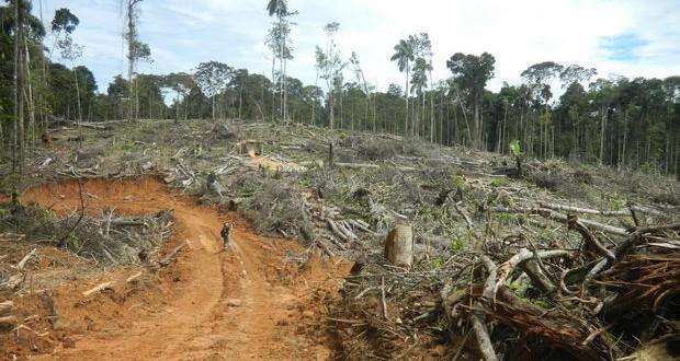 И индустријата за чоколади виновна за уништувањето на шумите