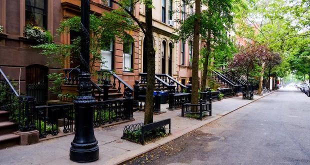 Градските дрвја растат побрзо?!