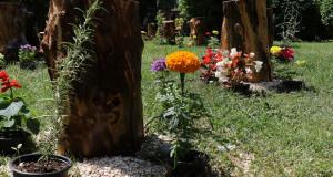 И ова е Скопје…Фестивал на цвеќето
