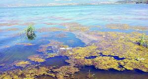 """Дојранското Езеро """"се дави"""" и со вода и без неа"""
