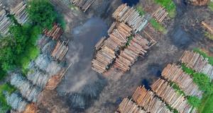 Кина ја сече втората најголема прашума во светот, за производство на ефтин мебел за САД
