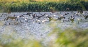 Холандија ќе има најголем вештачки парк на природата