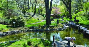 Во Јевремовац вегетираат растенија од српската и европската флора