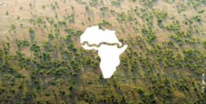 Голем зелен ѕид – од едниот до другиот крај на Африка