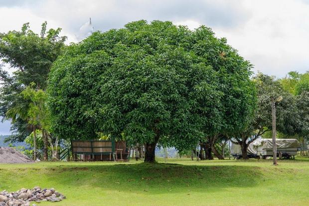 На Филипини студентите мора да садат дрвја за да можат да дипломираат