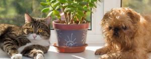 Растенија кои не треба да ги чувате во домот ако имате домашни миленичиња