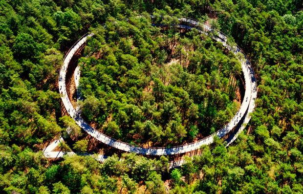 Велосипедска патека меѓу дрвја
