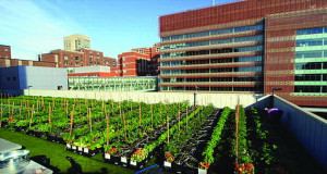 Урбана фарма на покрив од болница(ВИДЕО)