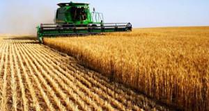 """Климатските промени ќе ја """"изедат"""" пченицата и пченката"""