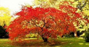 Јапонска градина во Леверкузен