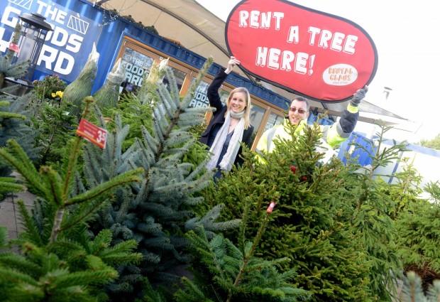 Литванија: Изнајмување на природни елки за празниците, за заштита на животната средина