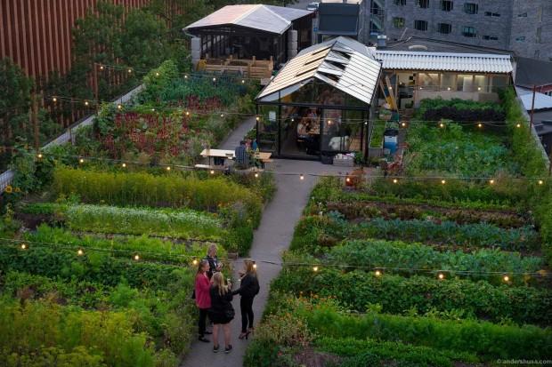 Властите во Копенхаген садат овошки чии плодови ќе бидат достапни за сите