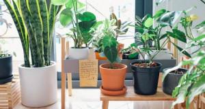 Две места во куќата каде што не треба да се чуваат растенија во текот на зимата