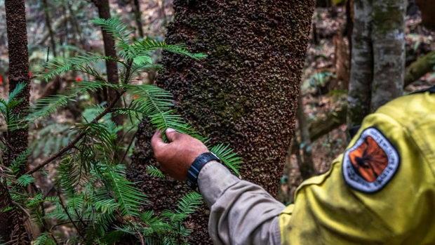 Во Австралија повторно се буди живот во природата