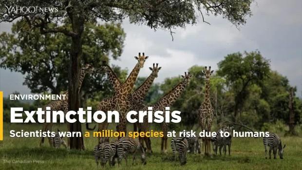 Обединетите Нации предупредуваат: Имаме уште 10 години до шестото масовно изумирање