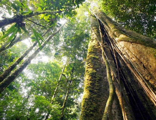 Вештачката интелигенција во заштита на шумите