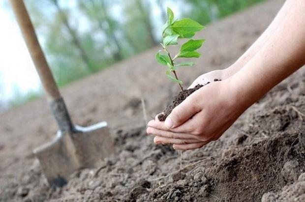 Со засадување дрвја нема да ги сопреме климатските промени