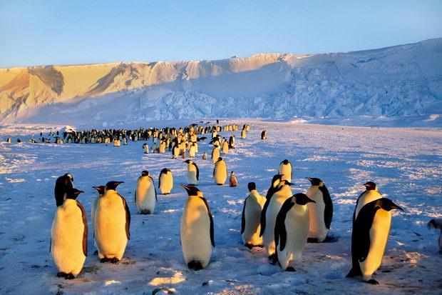 Emperor penguin colony, Antarctica