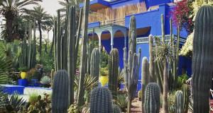 Majorelle ботаничката градина во Мароко