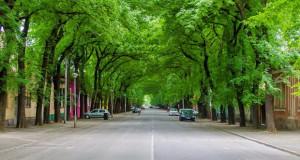 Улица во соседството која е вистинска зелена убавица