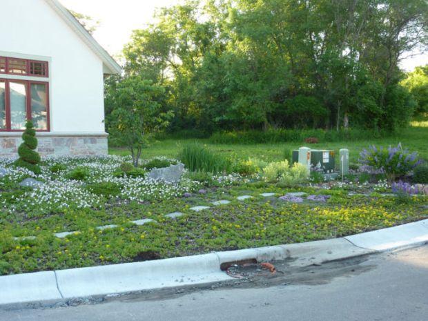 Во Минесота на граѓаните им се плаќа да садат тревник пријателски за пчелите