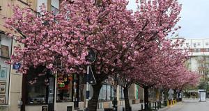 И ова е Скопје…пролет во полициски час