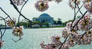 "Вашингтон ја слави пролетта со ""Црешов цут"""