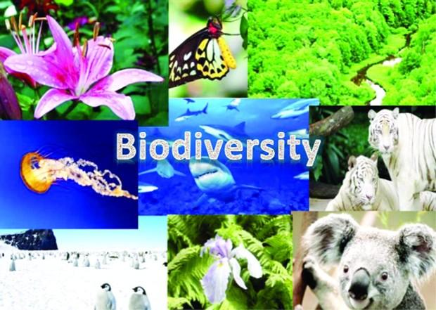 Европската комисија го објави планот за заштита нa биодиверзитетот во ЕУ