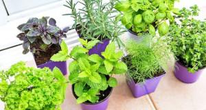 Направете лековита градина во домот
