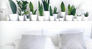 Зелени растенија идеални за спални соби