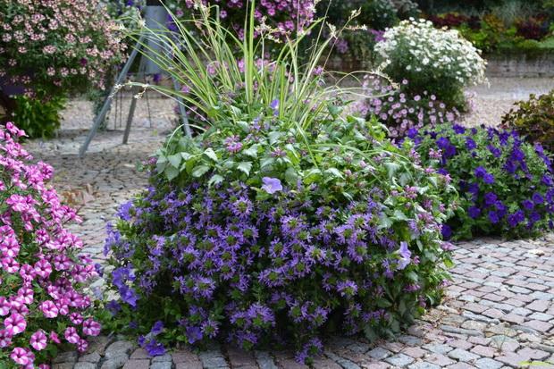 Шарени цвеќиња за уникатни и најубави двор и тераса