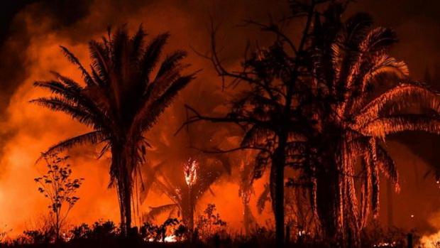 Пожари во Амазонија, најголемо ниво за еден месец за 13 години