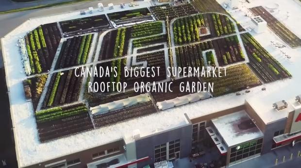 Прв супермаркет кој продава зеленчук од сопствена органска градина (видео)