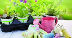 Како да ги заштитите растенијата од топлината