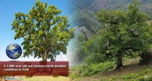 Илјадагодишен даб откриен на југот на Италија