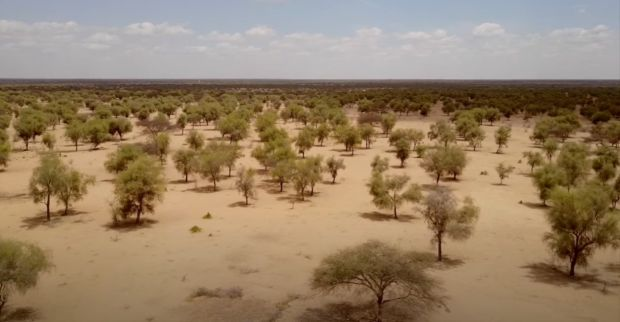 Дали Големиот зелен ѕид ќе може да го спречи ширењето на пустината?