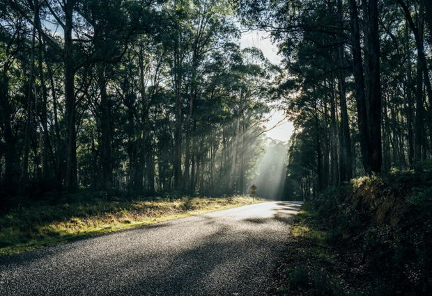 Sunshine over trees and road in remote woods Australia