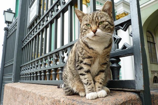 Како мачки од Сибир го спасиле Ермитаж