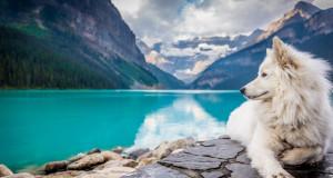 Документарните филмови за природата го подобруваат расположението