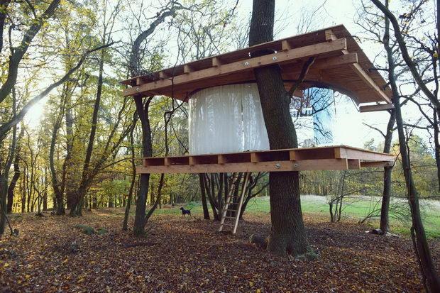 Стаклена куќа на дрво изградена со благородна идеја