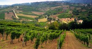 """Климатските промени ќе го """"испијат"""" македонското вино"""